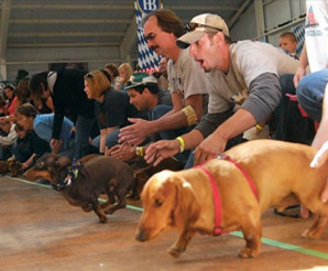 Dog racing at the Frankenmuth Oktoberfest