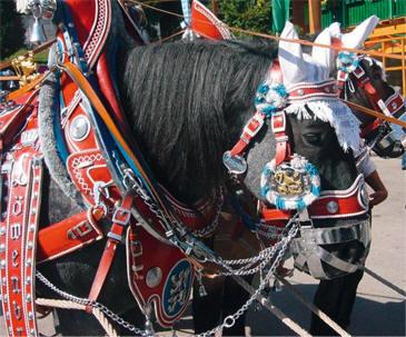 Horses in Oktoberfest regalia